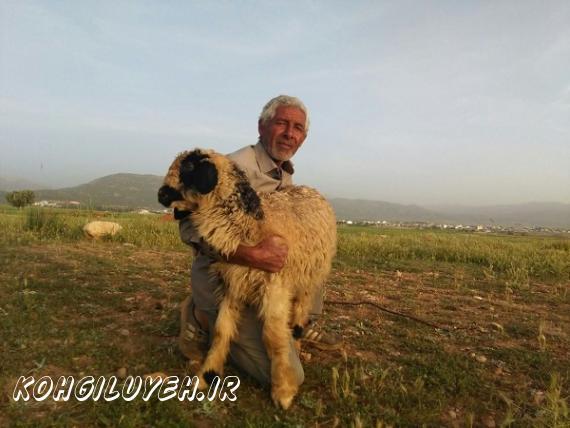 تصاویری زیبا از کوچ بهاری عشایر کهگیلویه/پایگاه خبری کهگیلویه